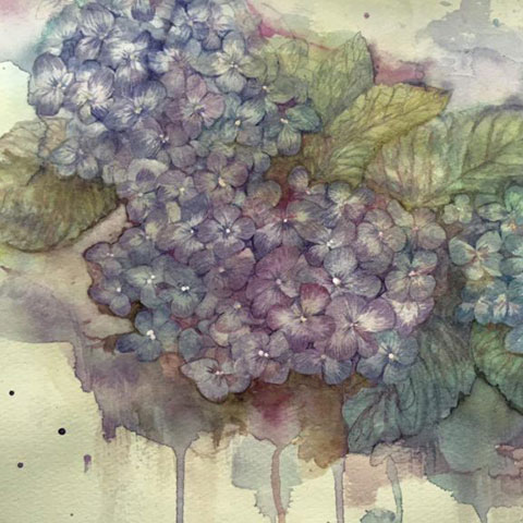 「紫陽花」Jun.2015~